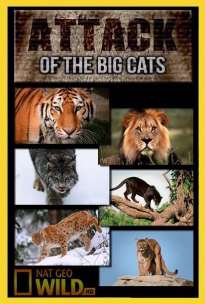 Атака больших кошек